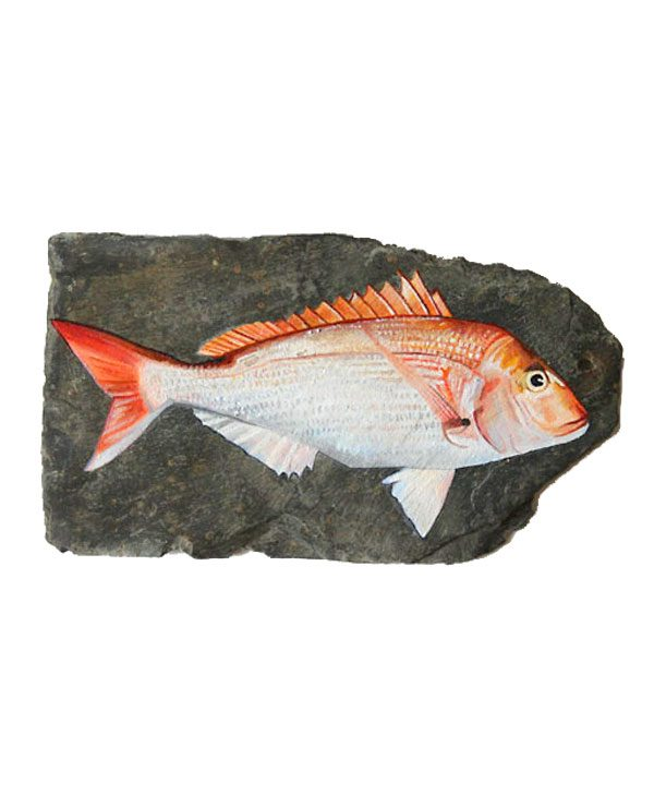Red Sea Bream